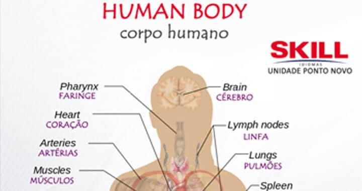Partes do Corpo Humano em Inglês e Português